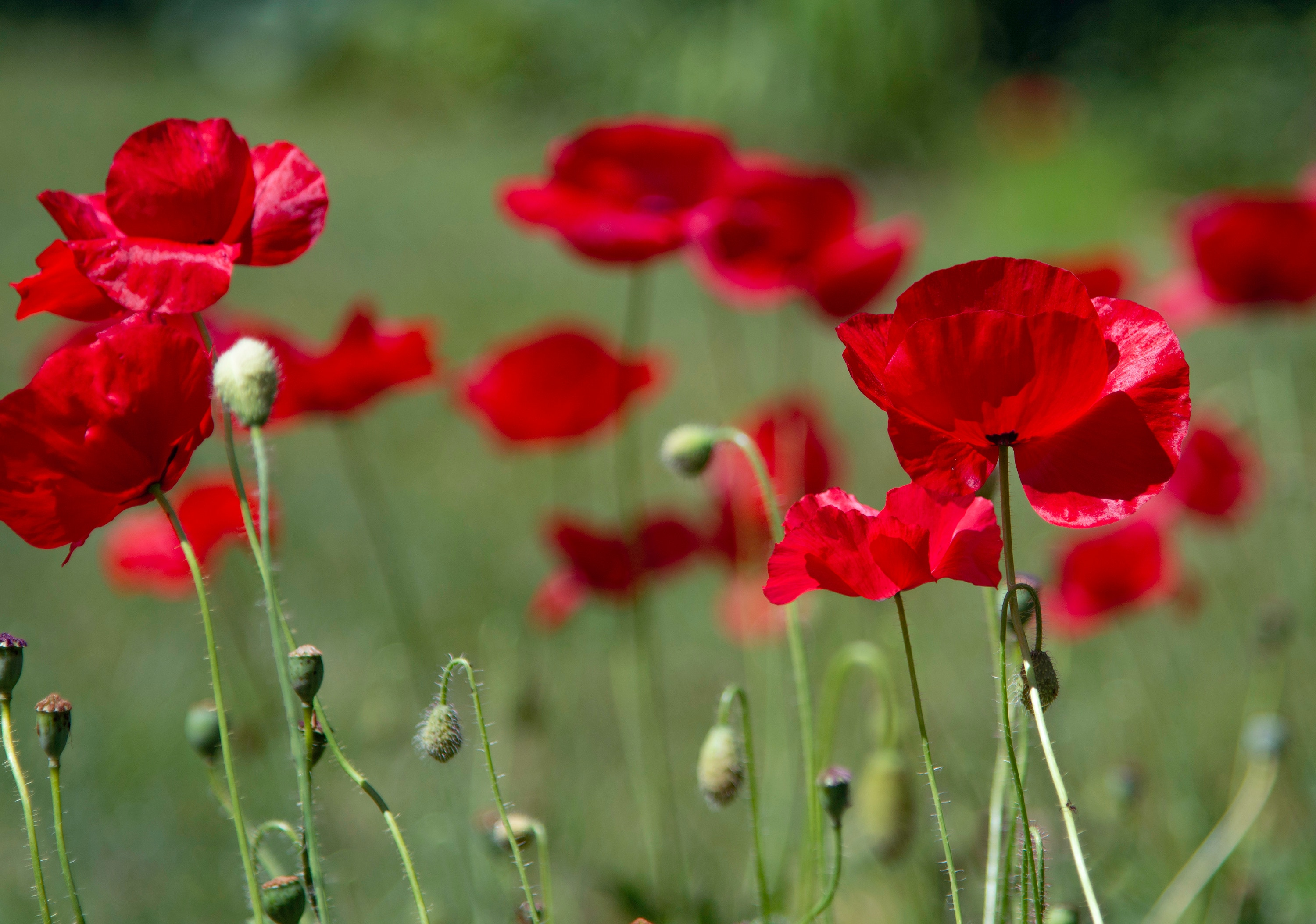 Rev Dr Mark Davidson's reflections on Remembrance Sunday